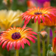 Multicolored closeup flowers — Stock Photo #49806393