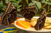 Three butterflies enjoying fruit — Stock Photo