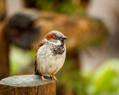 Little bird on wood — Stock Photo