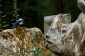 Rhino talking to bird — Stock Photo