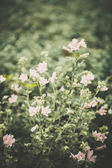 Pretty wildflowers done with a soft vintage filter — Foto de Stock