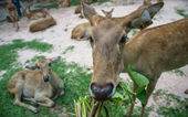 Bฺrow-antlered deer — Stock Photo