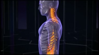 Back Pain Treatment. HD — Stock Video
