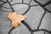 Isolated dry leaf on dry ground — Stock Photo