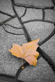 Isolated dry leaf on dry ground — Stok fotoğraf
