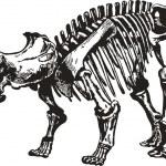 Постер, плакат: Dinosaur Skeleton