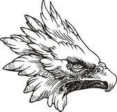 Aigle tête blanche — Vecteur
