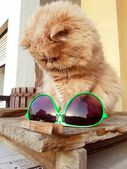 Cat with sunglasses — Stock Photo