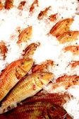 рыбы барабульки — Стоковое фото