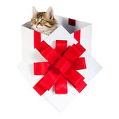 Kitten inside gift box — Stockfoto