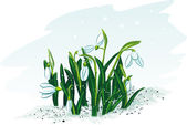 Spring-flowers-snowdrops — Stock Vector
