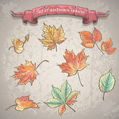 Set of autumn leaves of maple, chestnut and other trees. — Stock Vector