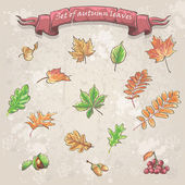 Set of autumn leaves, viburnum berries, chestnuts and acorns — Vector de stock