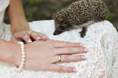 Hands of a bride with ring and hedgehog — Stock Photo