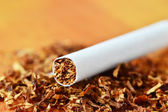 Tobacco in cigarettes with a brown filter close up — Stock Photo