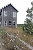 Cape Cod Wildflowers — Stock Photo