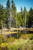 Otter Creek — Stock Photo