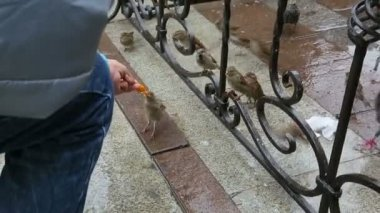 Bird eating fast food — Stock Video
