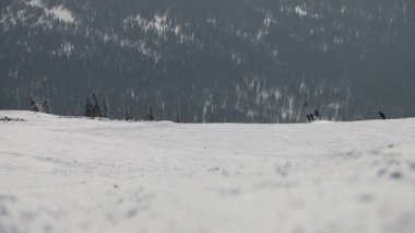Descent skiers — Stock Video