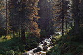 The creek woods with trees foliage and rocks in forest mountain — Stockfoto