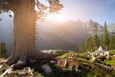 Summer landscape in the national park Ergaki - Russia — Stock Photo
