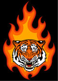 Tiger and fire — Stock Vector