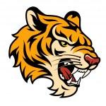 Roaring tiger — Stock Vector