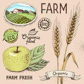 Farm objects — Stock Vector
