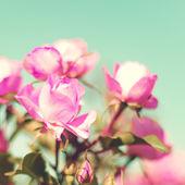 Vintage Pastel Roses — Stok fotoğraf