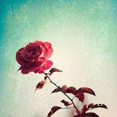 Retro red rose — Stock Photo
