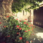 Flowers and tree near house — Stockfoto