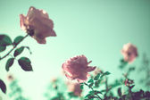 Rosas vintage — Foto Stock