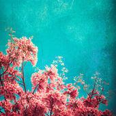 Cerejeiras em flor — Fotografia Stock