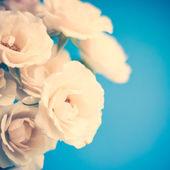 Vintage roses — ストック写真