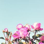 Vintage Pastel Roses — Foto de Stock