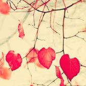 Heart-shaped Autumn Leafs — Foto de Stock