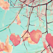 Heart-shaped Autumn Leafs — Photo