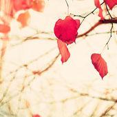 Heart-shaped Autumn Leafs — ストック写真