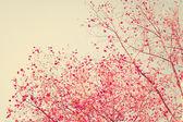 Foglie di autunno rosso pastello — Foto Stock