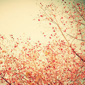 Pastel red autumn leafs — ストック写真