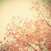 Pastel red autumn leafs — Foto de Stock