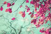 Reddish autumn leafs — Stock Photo