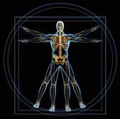 Vitruvian man — Stock Photo
