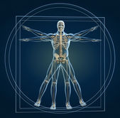 Body and skeleton in vitruvian man  — Zdjęcie stockowe