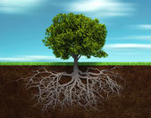 The tree and rood — Stock Photo