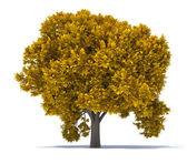Tree leaf rust  — Stock Photo