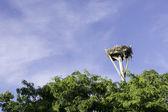 Osprey Nest — Stock Photo
