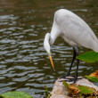 Постер, плакат: Egret on San Antonio Riverwalk