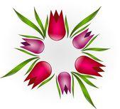 Tulips circle — Stock Photo