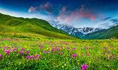 Alpine meadows — Stok fotoğraf